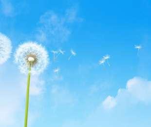 Piumino e microclima